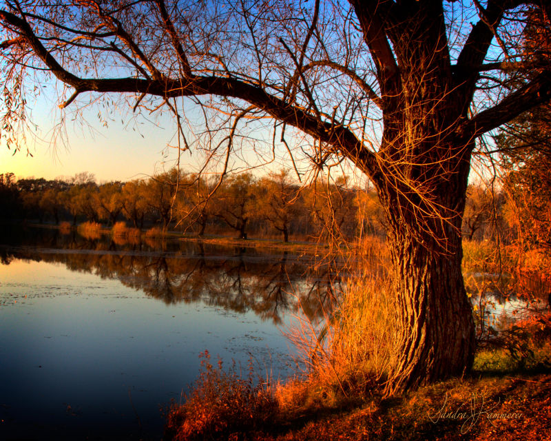 Gorgeous outdoor sunset photography in Niagara County Bond Lake Park.