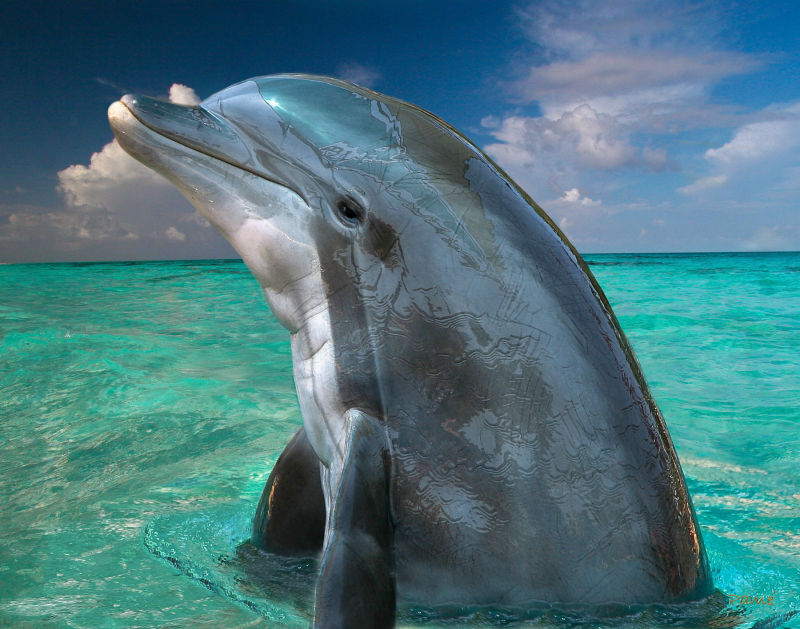 The secret about dolphins.  Dolphins in the Bahamas.