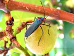 Entomology.  Collect Brazilian bugs!  Travel to Brazil.  Brazil vacation.