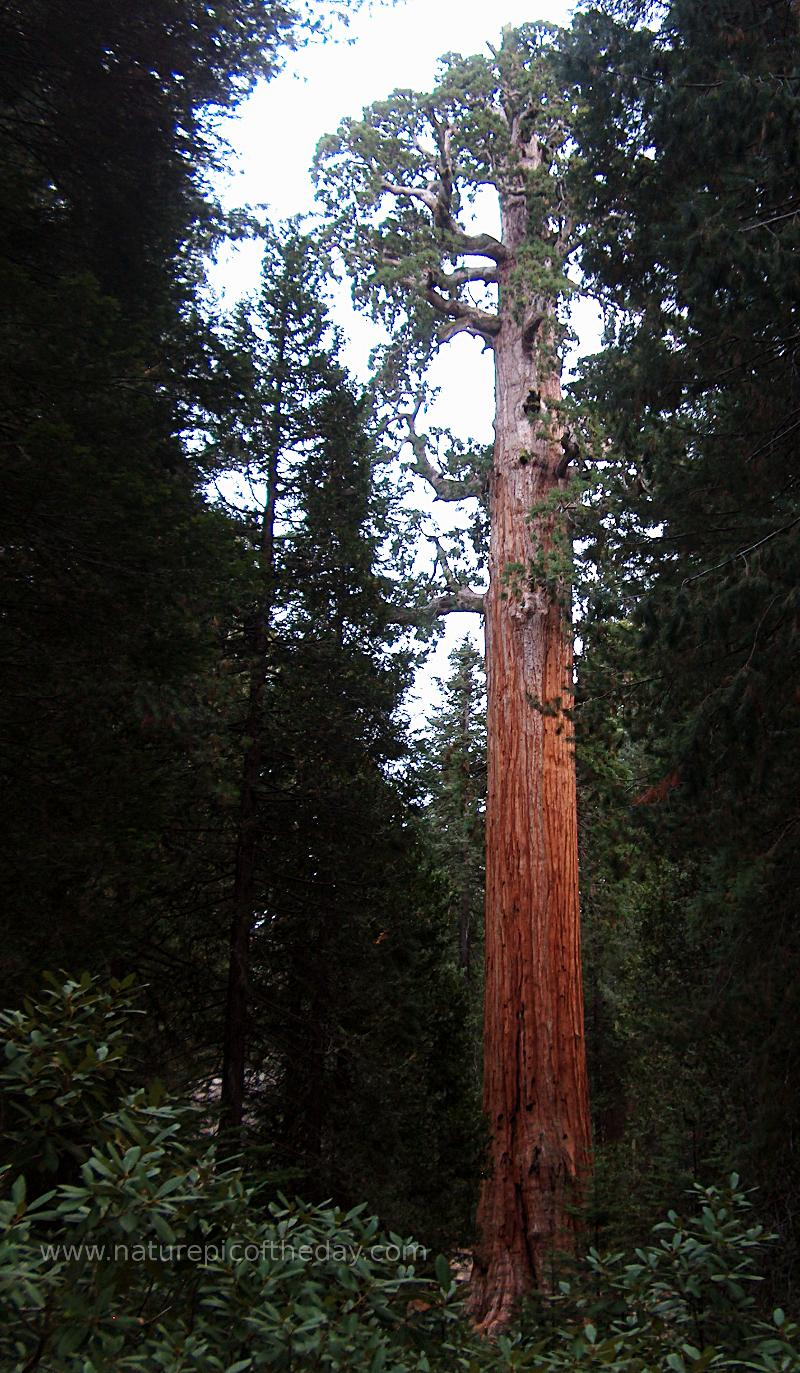Save the redwoods, preservation, preservatives, hiking shoes, wool socks.