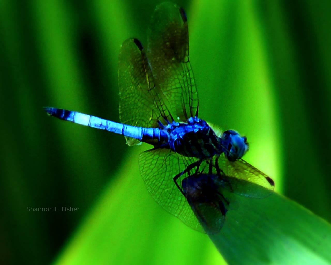 Dragonfly; Women Going Through Changes | Yellowstar ...