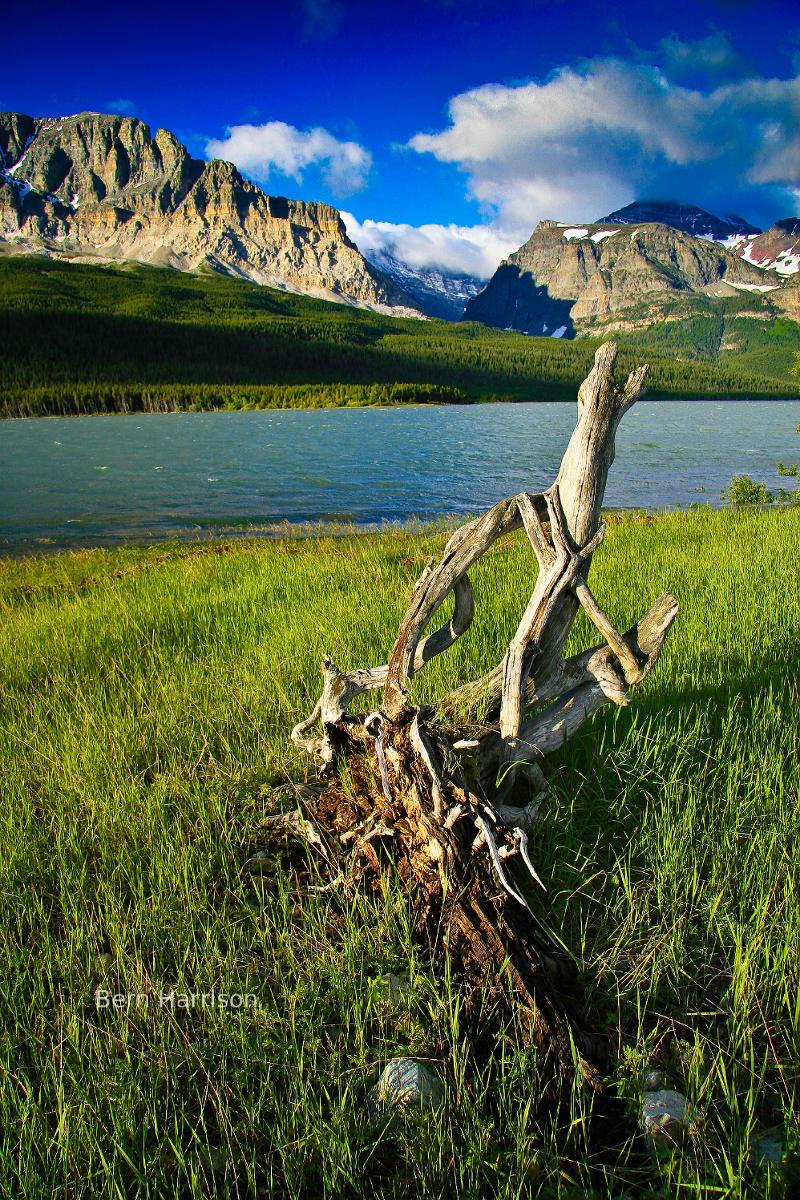 صور  الطبيعة الخلابة Wood_water_and_stone_in_many_glacier_800w