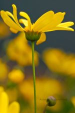 Flower seeds, plant your garden!  Wildflower pictures!