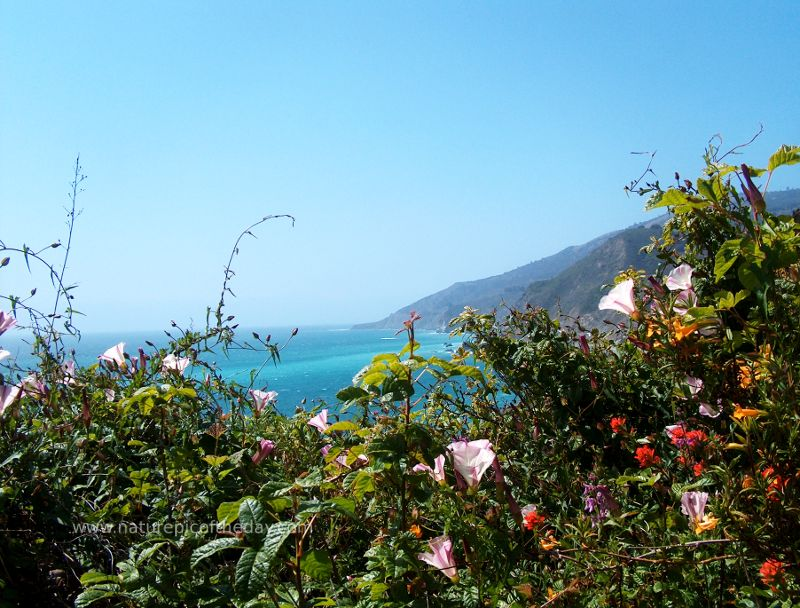 Flower arrangements, floral decorating, order flowers for delivery. Nature Picture.