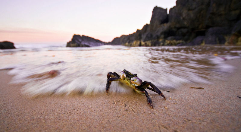 Fresh crab, crab recipes, crab bate, crabbing.  Nature picture.
