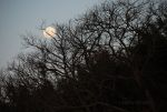 Moon silhouetted through trees.