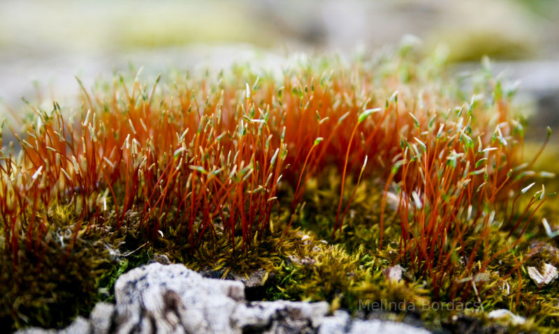 Moss in Hungary.