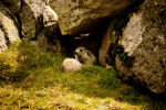 Marmot in Spain.  Tour Spain, vacation in Spain.