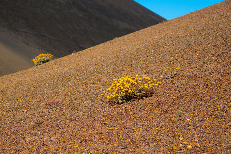 Plants on the slopes of Lassen National Park.