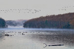 Geese over Tomhannock Reservoir, just outside of Troy, New York.