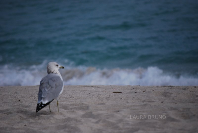 seagull and waves.