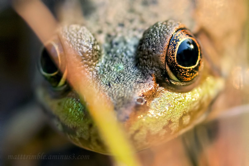Frog Eyes from Canada.