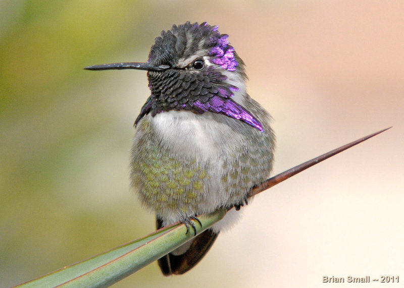 Hummingbird in Arizona.