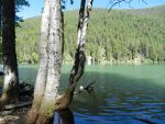 Tree in Elk Lake, MT