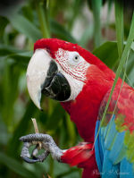 Macaw parrot, Salt Lake City, Utah zoo