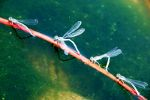 dragon flies walking in a line