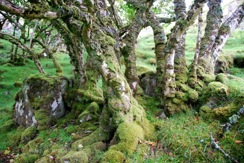 Trees in Scotland