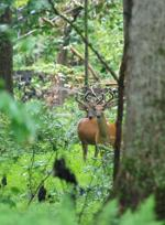 Bucks in Maryland