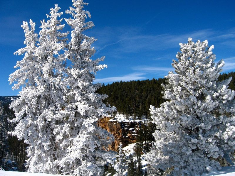 Frosted trees in a box canyon in San Juan National Forest