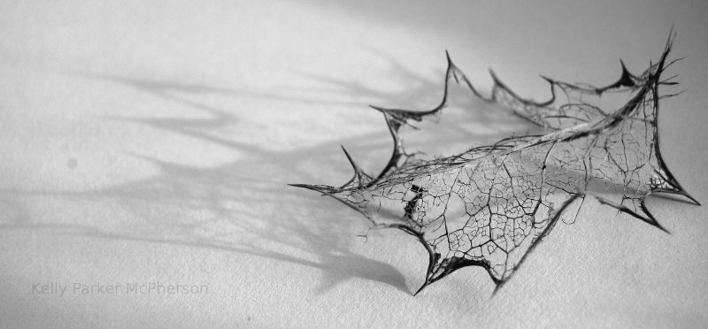 Skeleton of a leaf