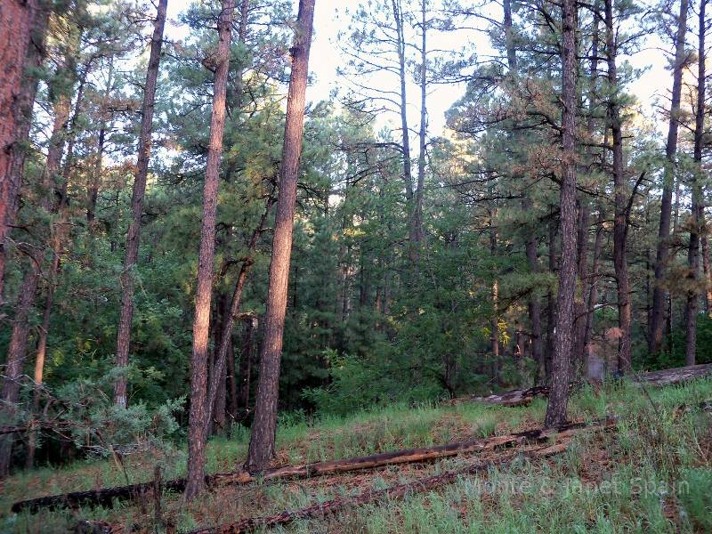 Woods near Ruidoso, N.M.