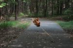 Falling leaf in Maryland