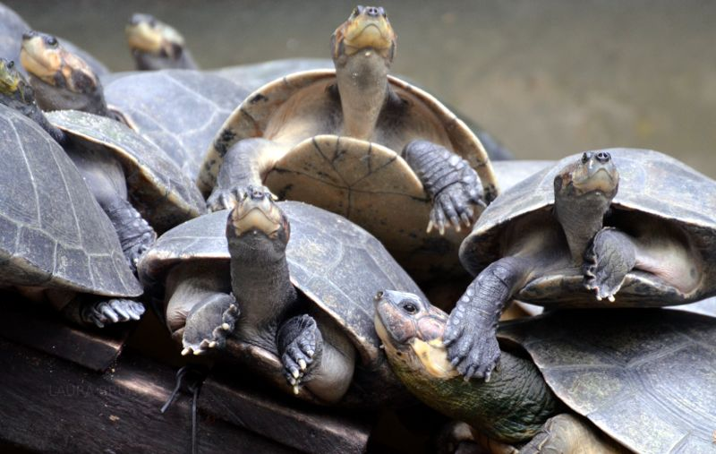 A wall of turtles
