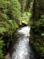 Creek in Western Washington