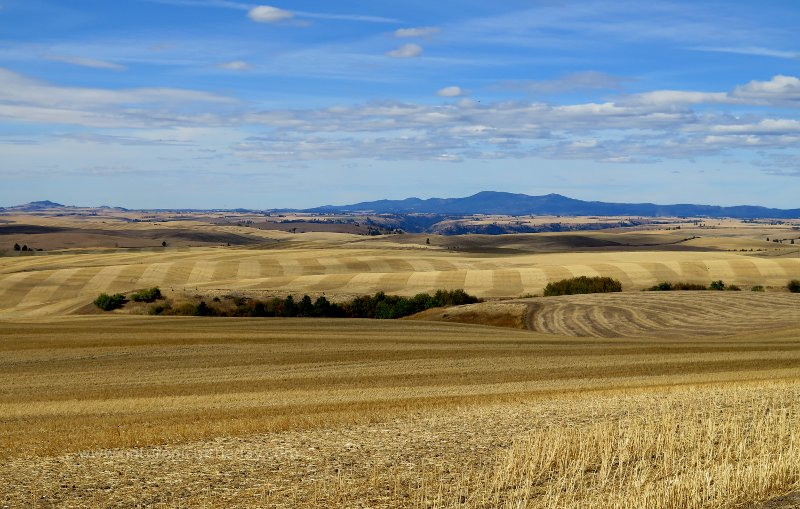 Palouse farming