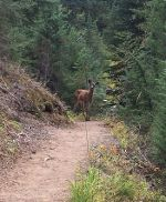 Doe in Oregon