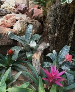 Exotic birds and flowers at the Reptile Gardens