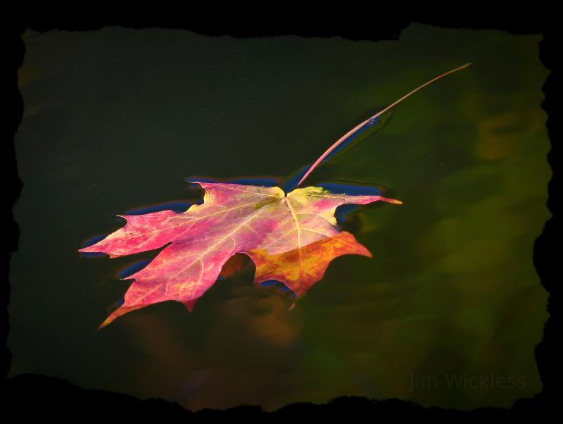 Beautiful fall colors on a fallen leaf