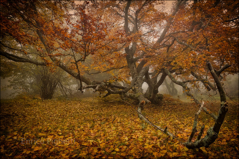 Incredible shot of foggy autumn woods.