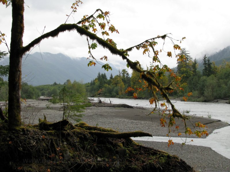 Hoh River, Washington