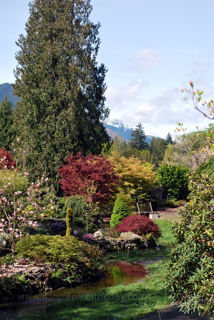 Whitney Gardens and the Olympic Mountains