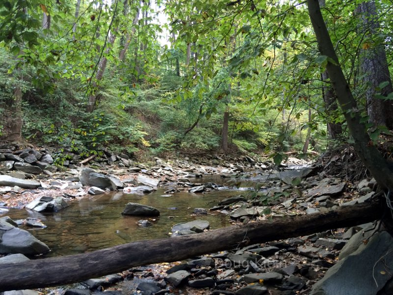 Forested creek bed in Virginia