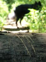 Claw Marks on a log.
