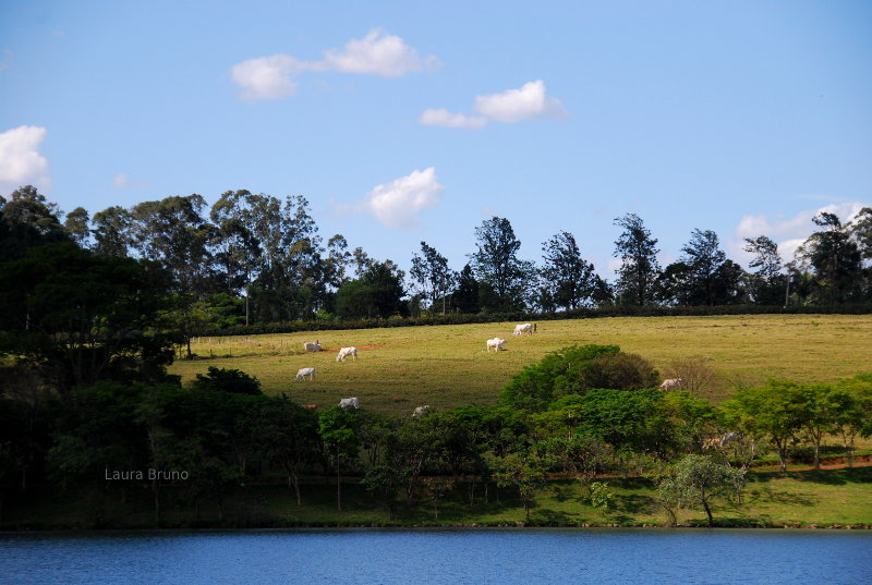 Cow pasture, and lake in Brazil