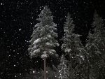 Snow falling at night in Montana