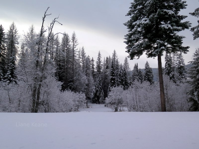 Winter in Montana