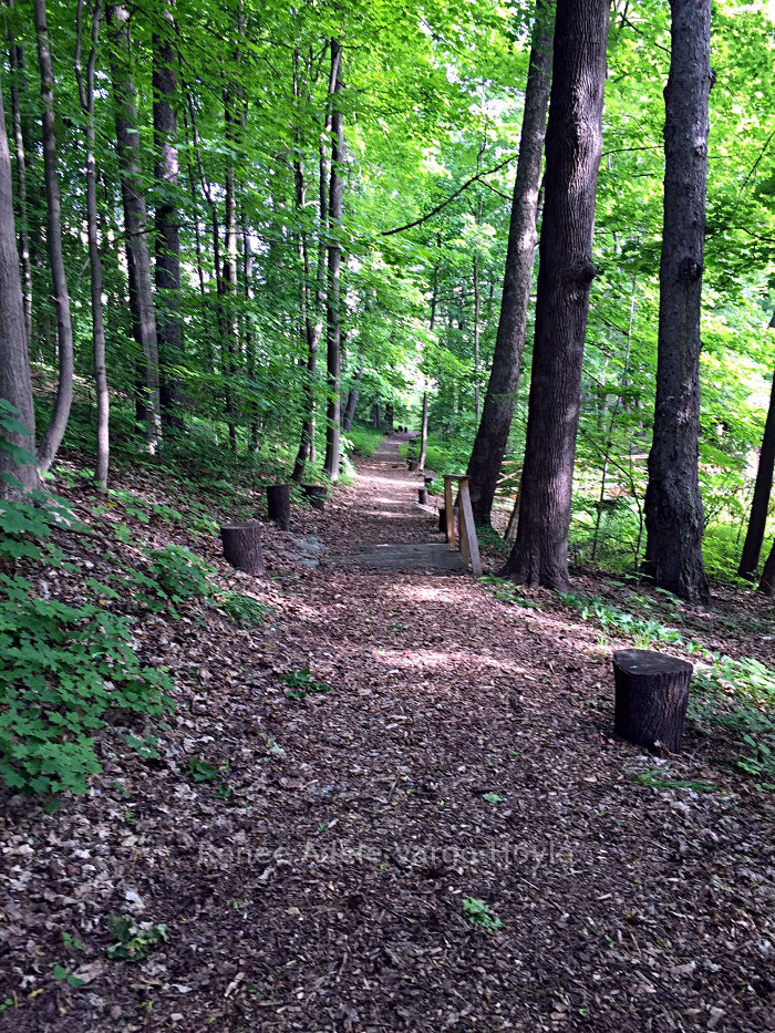 Wooded path in Nazareth, PA