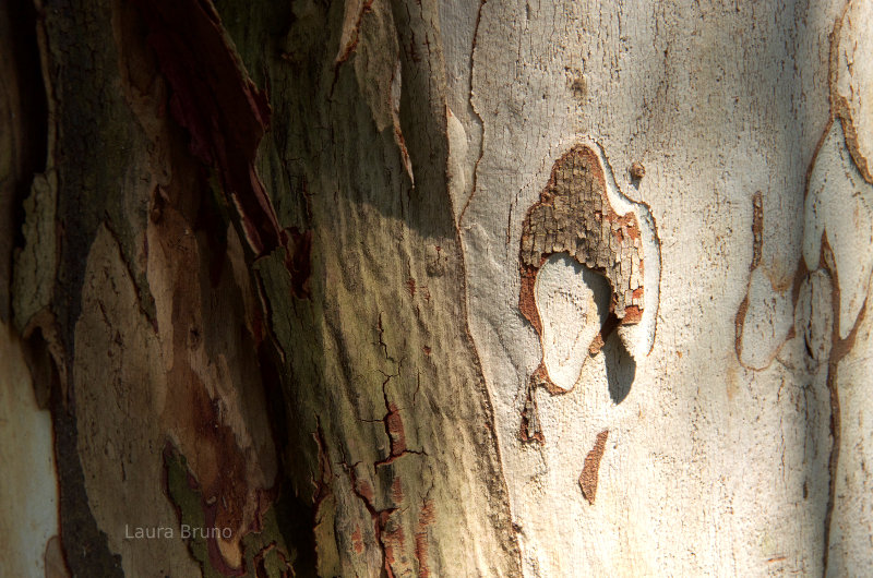 Pretty designs in the bark.