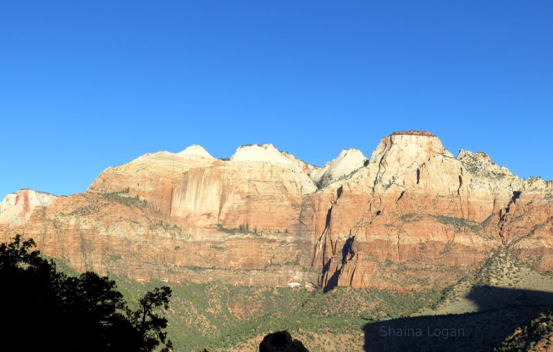 Sparse vegetation in the mountains at Zion National Park