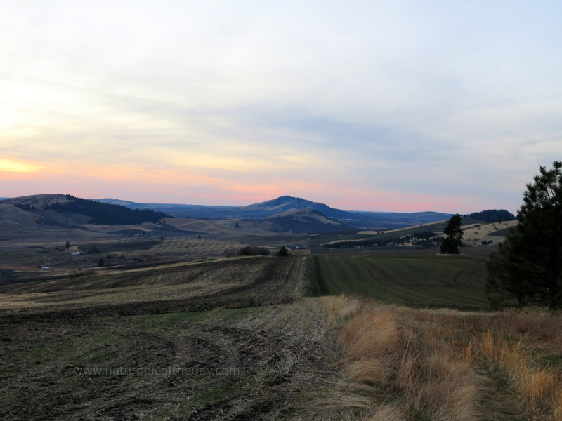 Rolling Farm Hills in the Palouse