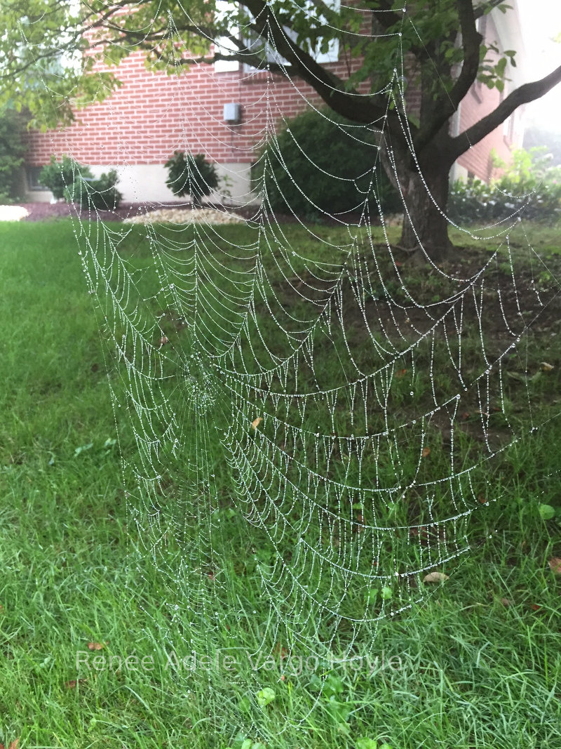 Large spider web in Pennsylvania.