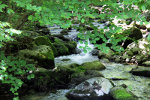 Creek in the Shenandoah Mountains