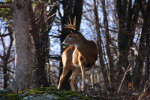 Handsome buck in the Blue Ridge Mountains