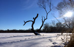 Minnesota tree in lake in winter