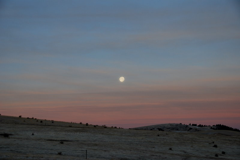 Moonset over the Palouse