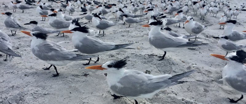 Sea birds all look in the same direction